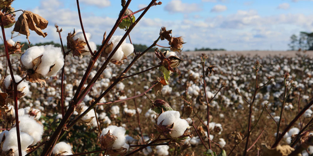 "Fabrics and the ""Better Cotton Initiative"""