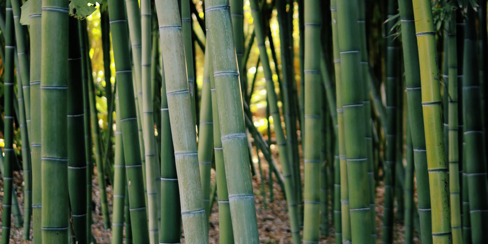 The innovation of bamboo in fashion